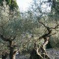 Assisi_144