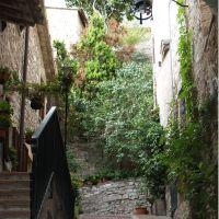 Weiterlesen: Italien öffnet seine Grenzen - auch für Assisireisende!